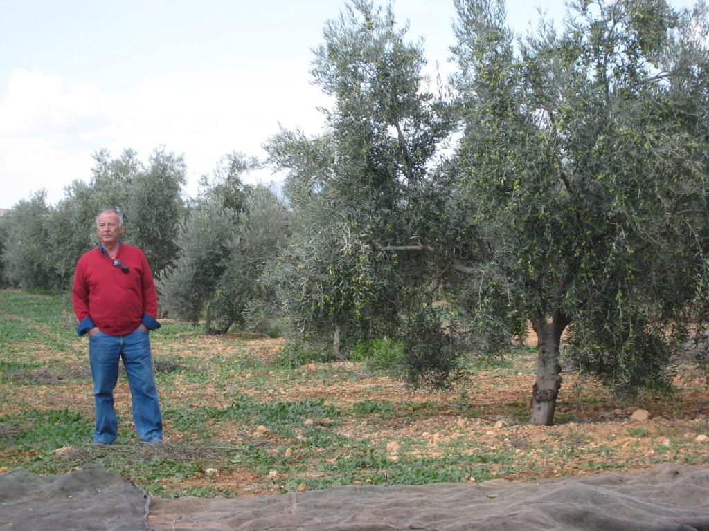 visita a los olivos