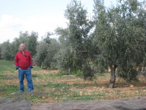 visiting the olive trees